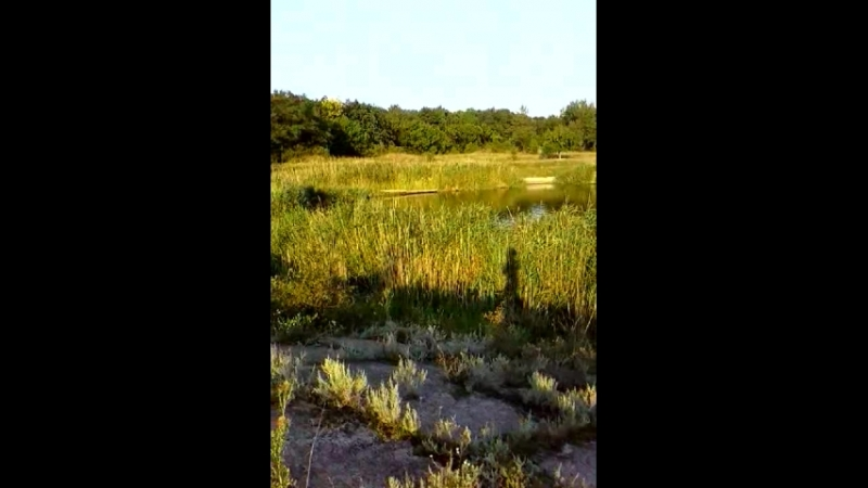 ставок Белая в Никитовке