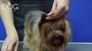 Fashion Dog TV Гигиеническая стрижка на примере стрижки йорка