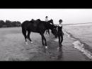 Катя Базилик прогулка на лошадях