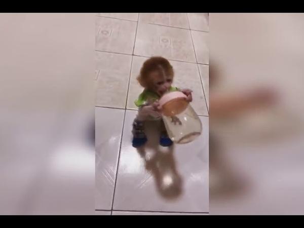 Маленькая обезьянка пьет