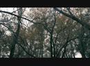 Осень,дождь