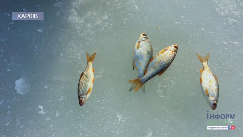Харківський рибоохоронний патруль рятує рибу від задухи