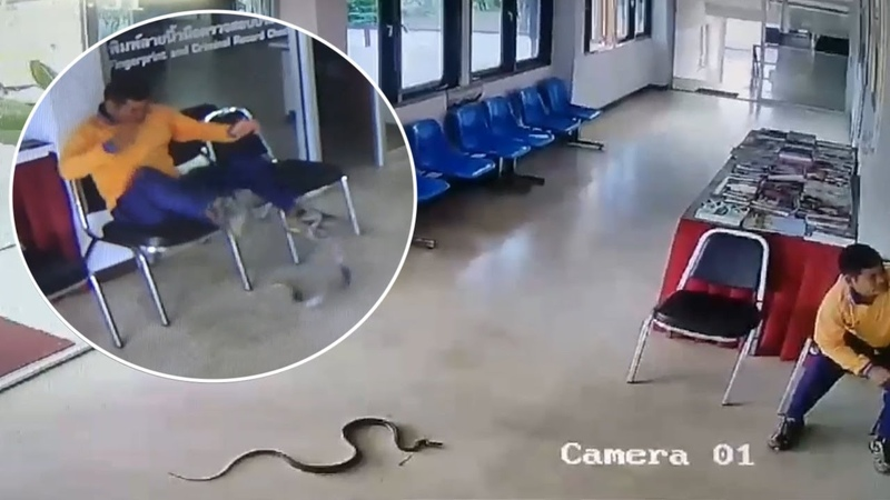 Snake Slithers Into Police Station And Jumps At Man