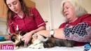 Измерение артериального давления у кошки методом Допплера в области хвоста Doppler blood pressure measurement in the cat use of the tail