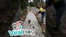 Chicken Ruins Freshly Paved Concrete ViralHog