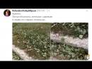 Санкции будут усиливаться впаривание Медведчука серный Армянск и свидетели Иеговы HELGI`s NEWs