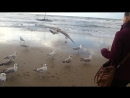 Seagull feeding (level 3)_720p