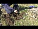 Как избавиться от кротов в саду на огороде