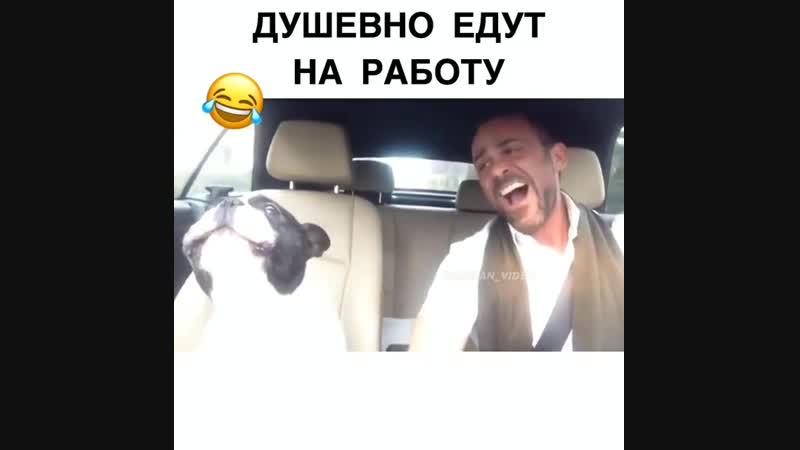 Дружно едут на работу))