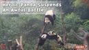 Heroic Panda Suspends An Awful Battle | iPanda