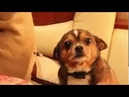 хозяйка ругает собаку