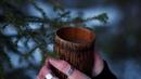 PINE NEEDLE CHAGA TEA How to make healthy forest tea