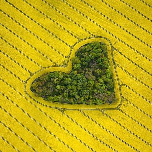 В Польше, прямо посреди поля, произрастает небольшая роща в форме сердца.