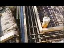 Армирование и утепление фундаментной плиты