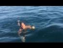 черепаха в чёрном море
