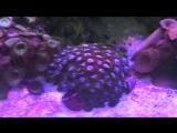 Аквариум с Экзатическими Рыбками и Живыми Морскими водорослями.