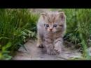 Самые распространенные болезни кошек