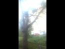 Денис повелитель деревьев