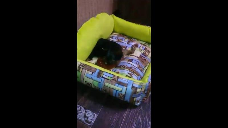 Милена знакомится с лежаночкой видео от благодарной заказчицы