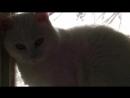 Кот взял на себя семейные проблемы смотреть всем