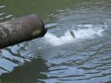 Чумачечая форель... Рыбный садок в Ойцувском национальном парке под Краковом