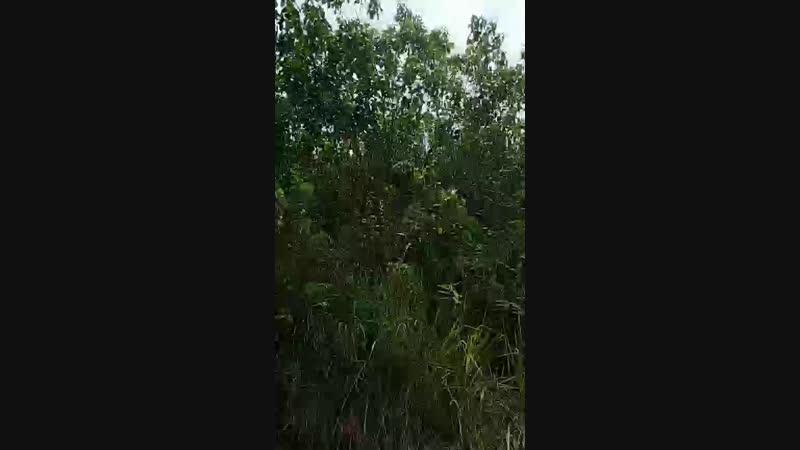 Выезд в лес