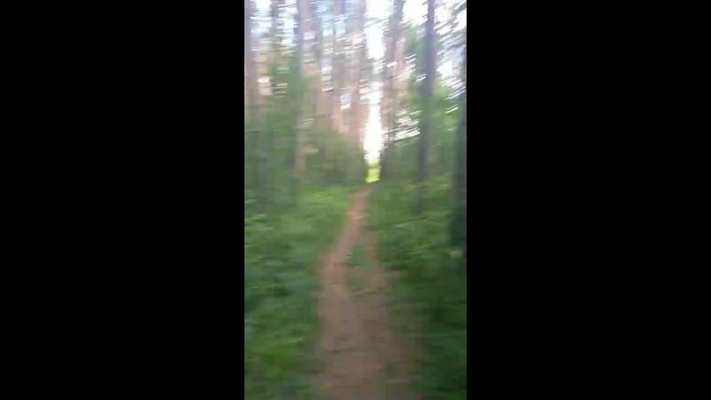 Пробежка лес и кайф