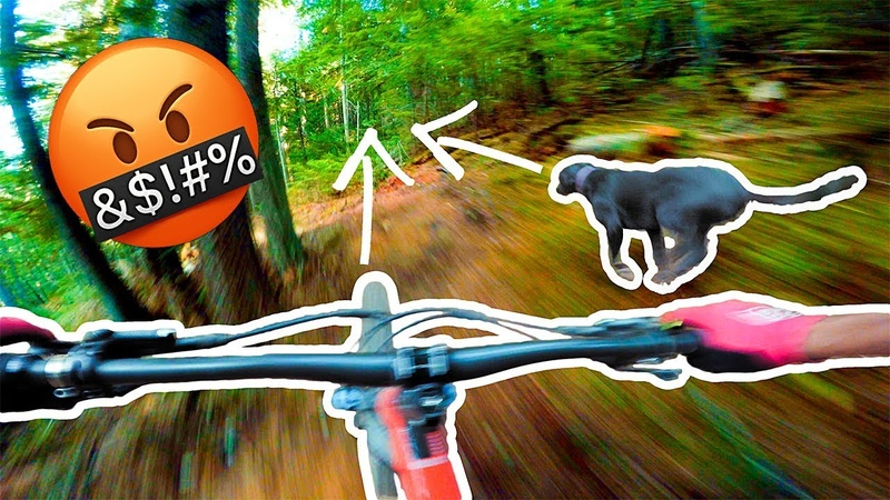 THE DOG WOULDNT GET OUT OF THE F**KING WAY! | Riding in Salmo, BC!