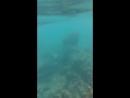 Кораллы у пхи-пхи