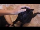 Черняк-мой кот