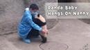 Cuteness Overload! Baby Panda Asks For Nanny's Cuddle! | iPanda