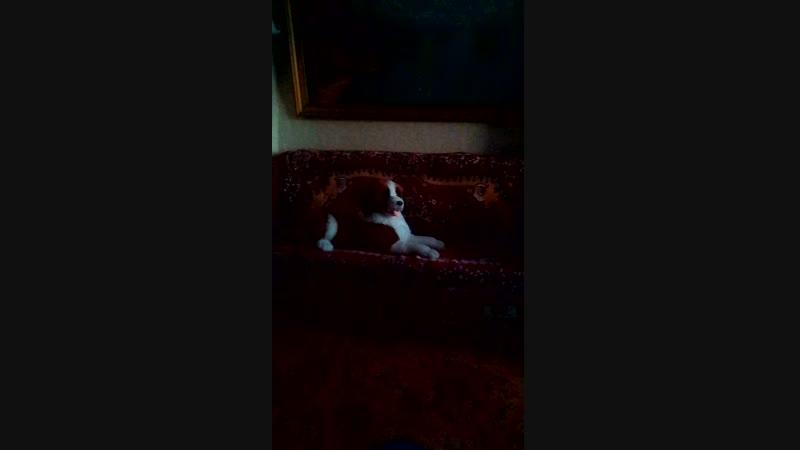 мой родной дом и любимая игрушечная собака мой родной дом