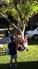 Wedgie Tree
