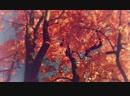 Windom R - Golden Autumn