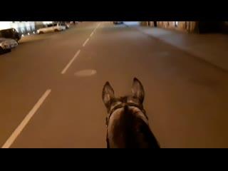 Saint - Petersburg horse