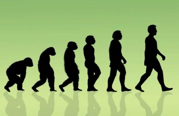 Православная церковь о теории эволюции: отношение, мнение и ответы на частые вопросы