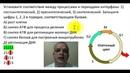 Установите соответствие между процессами и периодами интерфазы