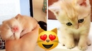 Funny And Cute Kitten Sweet cats compilation 2018 Nov