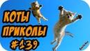 ПРИКОЛЫ С КОТАМИ С ОЗВУЧКОЙ на русском Смешные коты и кошки 2018 ПОПРОБУЙ не сме
