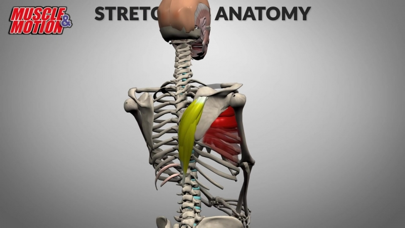 Stretching Anatomy (1080p).mp4