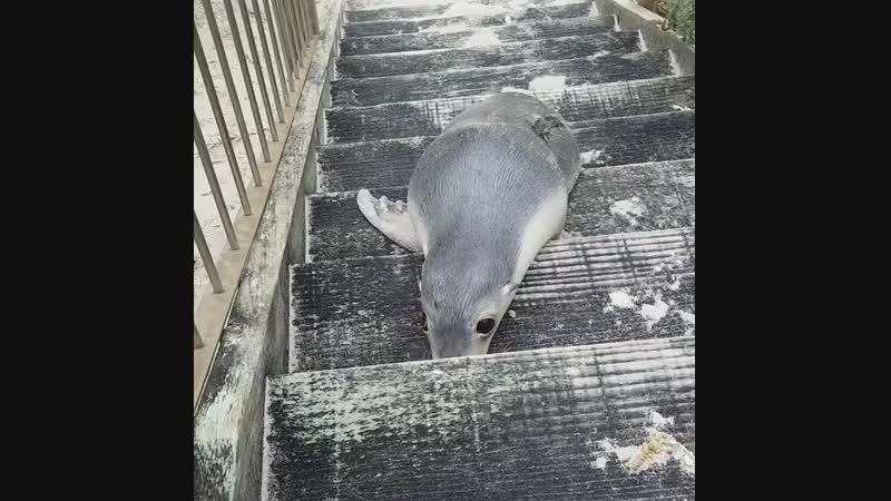Ластами по лестнице тоже можно