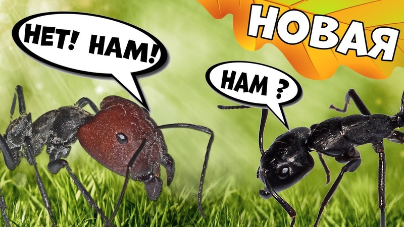 Новая муравьиная ферма! Кто в ней будет жить?