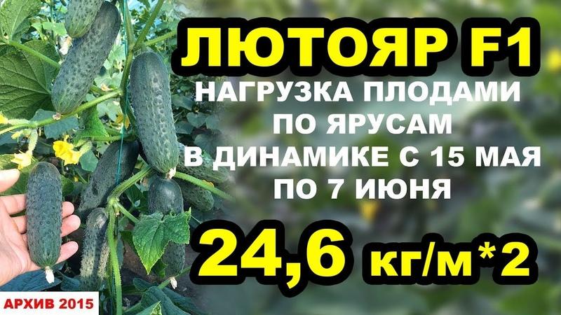 Огурец Лютояр F1. Нагрузка плодами по ярусам, 24,6 кгм*2