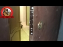 Установка замков в металлическую дверь в архангельске.mp4