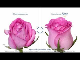 Dove мусс для умывания роза