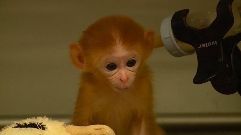 Приют для обезьянок