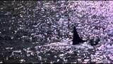 Keiko Matsui - Flowers Of the Sea Gregorian &amp Saran Brightman - Moment of Peace
