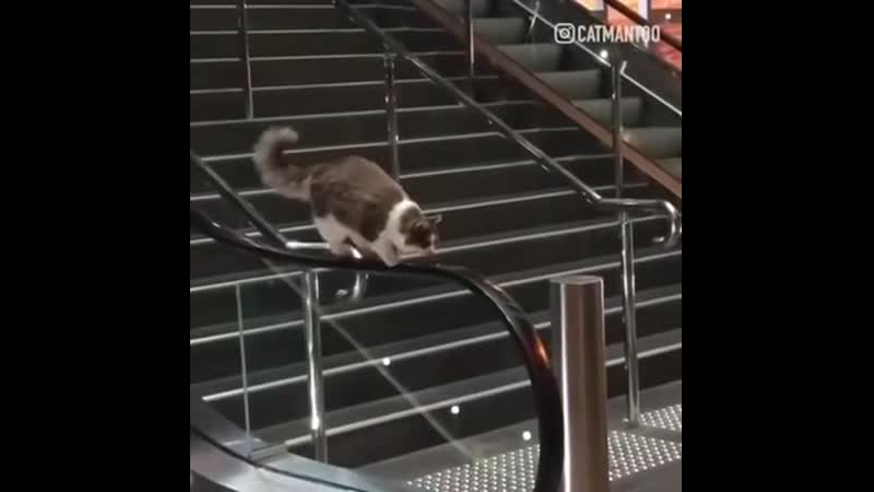 Catwalk moonwalk