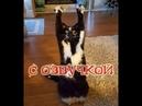 Приколы с котами – Смешная озвучка животных – РЖАКА ДО СЛЁЗ - PSO