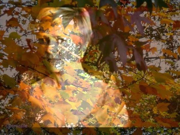 Barbara Bonney Vier letzte Lieder (September) by Strauss